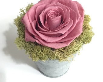 Preserved pale pink rose display in galvanised zinc pot