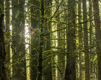 Magic through the Trees