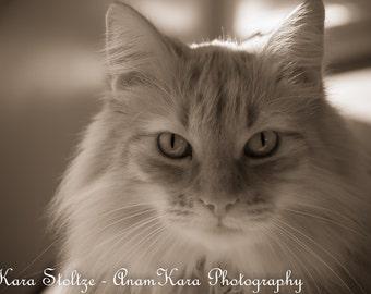 Cat in Sepia