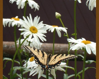 Swallowtail Greeting Cards (set of two)  D73sw