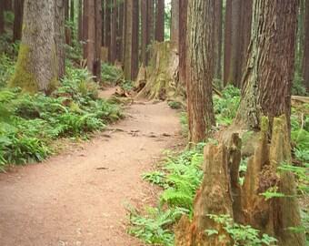 Arcata Community Forest