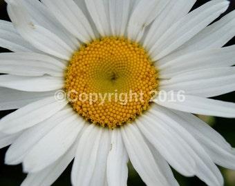 Flower Print (10cmx15cm)