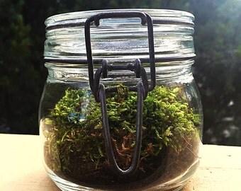 Large Hatched Moss Terrarium