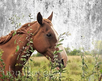Horse Photo, Equine Photography, Country Decor, Ginger Horse, Grunge Texture, Irish Decor, Horse Lover, Tralee, Kerry,IRELAND Art, Horse Art