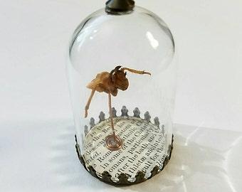 Cicada Shell Hybrid Creature Number Twenty Three