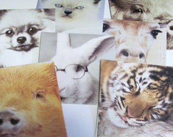 7 Handmade Animal Envelopes with inserts Recycled Upcycled Set no. 4