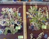 Choose your Real Pressed Flower Assortments Grown in Alaska 381 FL