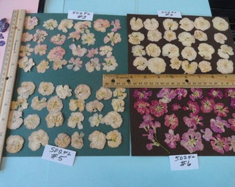Choose your Stock Flowers Pressed and Preserved in Alaska  502 FL
