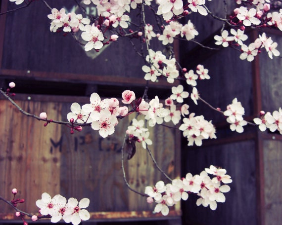"""Pink Spring Flowers / Rustic Floral Art / Fine Art Photography / Brown Wooden Apple Crates /  """"Plum Blossoms and Apple Boxes"""""""