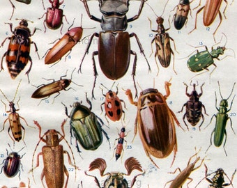 1920 Meet the Beetles Double Sided Chart