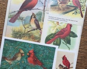 Red Bird the Cardinal Vintage Nature Collage, Scrapbook and Planner Kit Number 2101