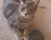 Cat toy, Catnip, Catnip toy, Organic catnip, Cat, Cat treat, Crazy cat lady, Grey kitty, Bohannon, Toy, Toy kitty