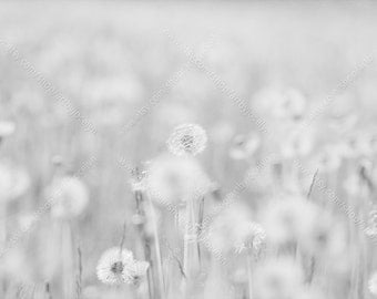 Digital Photo Download, Light Soft Blurred Dandelions in Field, High Key Black and White Nature Stock Photo, Dandelions and Seeds Background