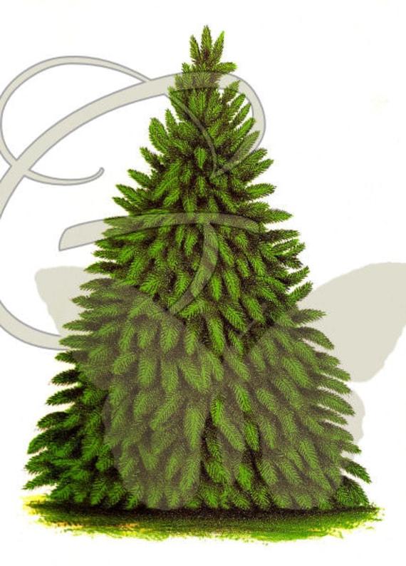 Tree Digital Download Crafting Illustration Scrapbooking Printable Clip Art Image