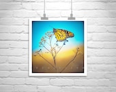 Monarch Butterfly Art Print, Butterfly Photography, Insect Art, Square Print, Square Art, Fine Art Photography, 5 x 5, 8 x 8, 10 x 10