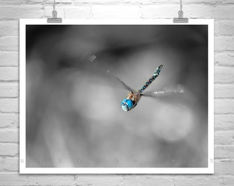 Dragonfly Art, Black and White, Nature Photography, Bug Art, Insect Art, In Flight, Dragonfly Print, Murray Bolesta