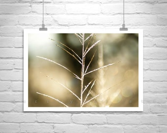Fine Art Photography, Minimalist, Elegant Art, Nature Photography, Pale Gold, Abstract, Frosty, Grassy, Golden, Gold, Arivaca, Cienega