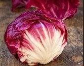 Organic Endive Radicchio Rossa Di Verona Italian Chicory Heirloom Vegetable Seeds
