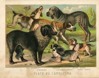 Antique Print of Dogs- St Bernard, Pointer, Spaniels Color Lithograph 1880s Johnson's Household Book of Nature