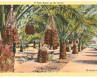 Vintage California Postcard - A Date Grove on the Desert (Unused)