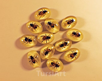 One Dozen Honey Bee Cabochons Real Insects Encased in Resin 18x25 Oval Cabochon Jewelry Settings Real Honeybee Real Bugs White Back Apis