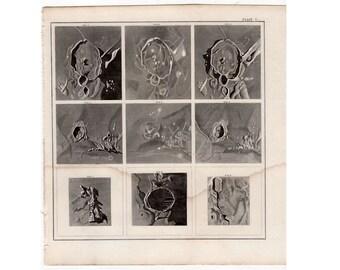 1884 ANTIQUE SUN SPOTS lithograph solar comets original antique celestial astronomy print