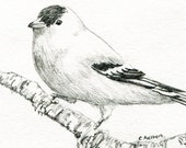 Original Pencil Sketch of an American Goldfinch - 4 x 6 Art for Sale