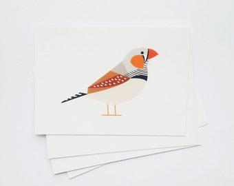 Zebra Finch postcard print