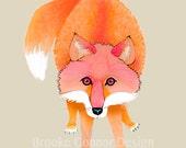 Red Fox Kit Fox Vulpes Sly Fox