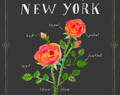 New York State Flower Print, The Rose