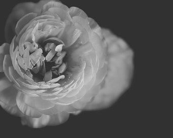 ranunculus flower -b & w-flower photography -flower-black and white photography (5 x 7 Original fine art photography prints) FREE Shipping)