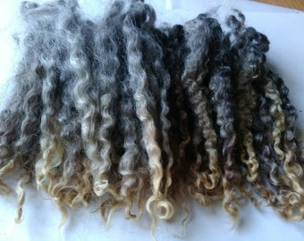 Teeswater X wool / Primitive Spinning Locks / Doll Hair / Felting (349)