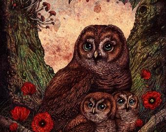 """Tawny Owlets 8x10"""""""
