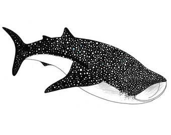 Whale Shark (A4)