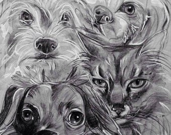 Custom Hand-Drawn Pet Portraits