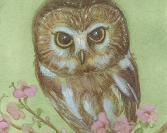 Saw Whet Owl 5x7 Print with doodle