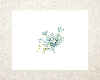 Forget Me Not Note Cards