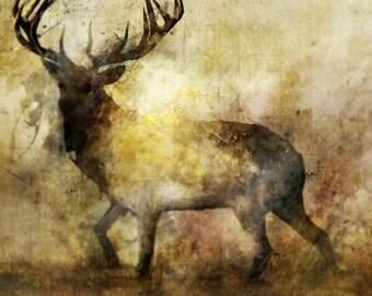Calm Deer 04: Giclee Fine Art Print 13X19