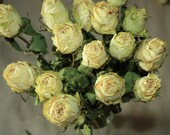 15 Gorgeous Dried Roses - Natural Color - Roses for Weddings, Luck-Love-Romance and all other Matters of the Heart - Flower Bouquet