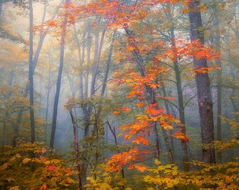 Fall color photo, fine art photo,  red blue mustard landscape photo, woodland, vertical wall decor man cave, office, lodge gorgeous color