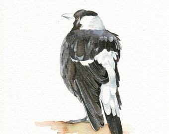 Magpie print of watercolour painting. A4 size medium print. Australian bird painting.