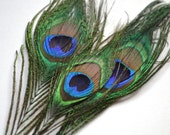 4 Small Peacock Feathers