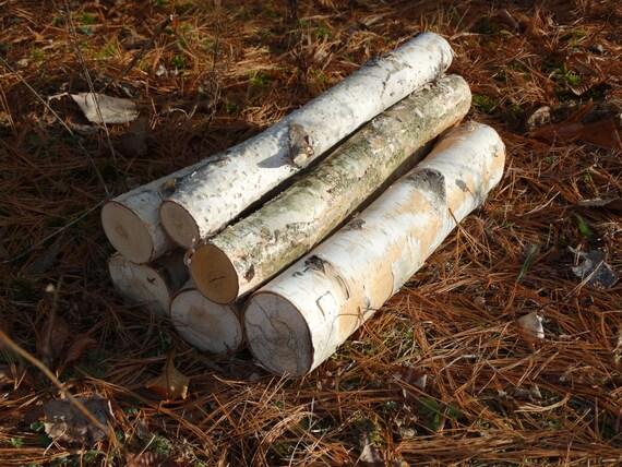 White birch logs 6 white birch logs rustic craft for White birch log crafts