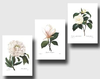 Botanical Print Set (White Room Decor, White Flower Art, White Nursery Decor, White Wall Art) Redoute Set of 3 Prints