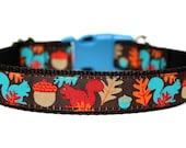 "Squirrel Dog Collar 1"" Fall Dog Collar SIZE LARGE"