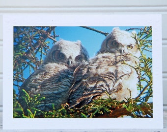 Great Horned Owls Photo Greeting Card, Owlets in Tree, Fine Art Photography, Bird Photo Card, Notecard for Bird Lovers, Any Occasion Card