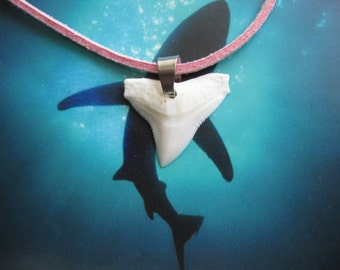 "Shark Tooth Necklace, Modern day Bull Shark tooth, ""Pink"" Suede leather cord 20"", Stainless steel bail"