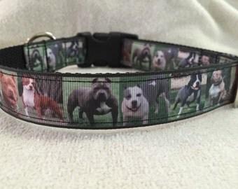 Pitbulls Custom Dog Collar