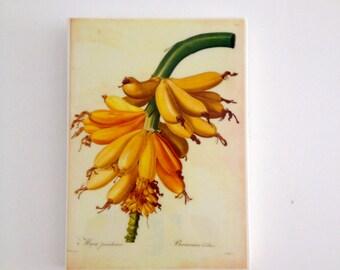 Tropical Banana Plantain Vintage Wall Tile
