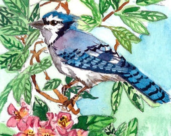 ACEO limited EDITION (2/25) of an ACEO original watercolor painting, bird art print, bluejay watercolor, Bluejay in blooming rhododendron